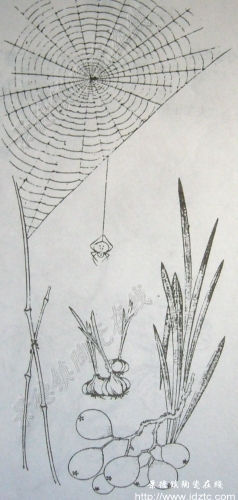秋天的大树铅笔画图片展示
