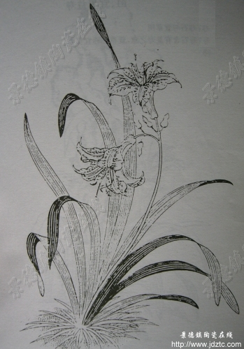 素描陶瓷花纹图案